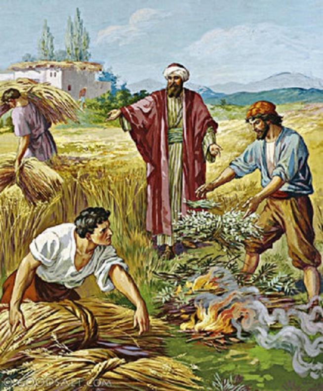 Le bon grain et l ivraie 11