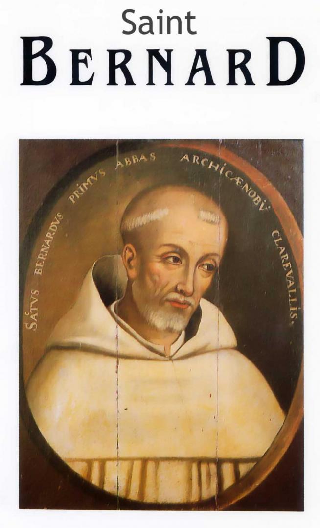 Saint bernard 11